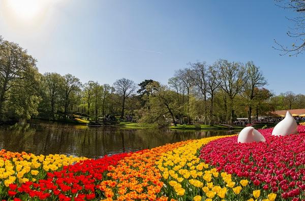 Holland med tulpaner och porslin